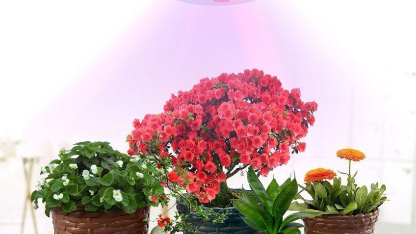 Per te un codice sconto amazon del sulla lampada per piante